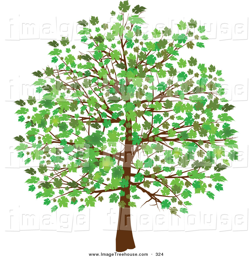 Free clip art trees and leaves.