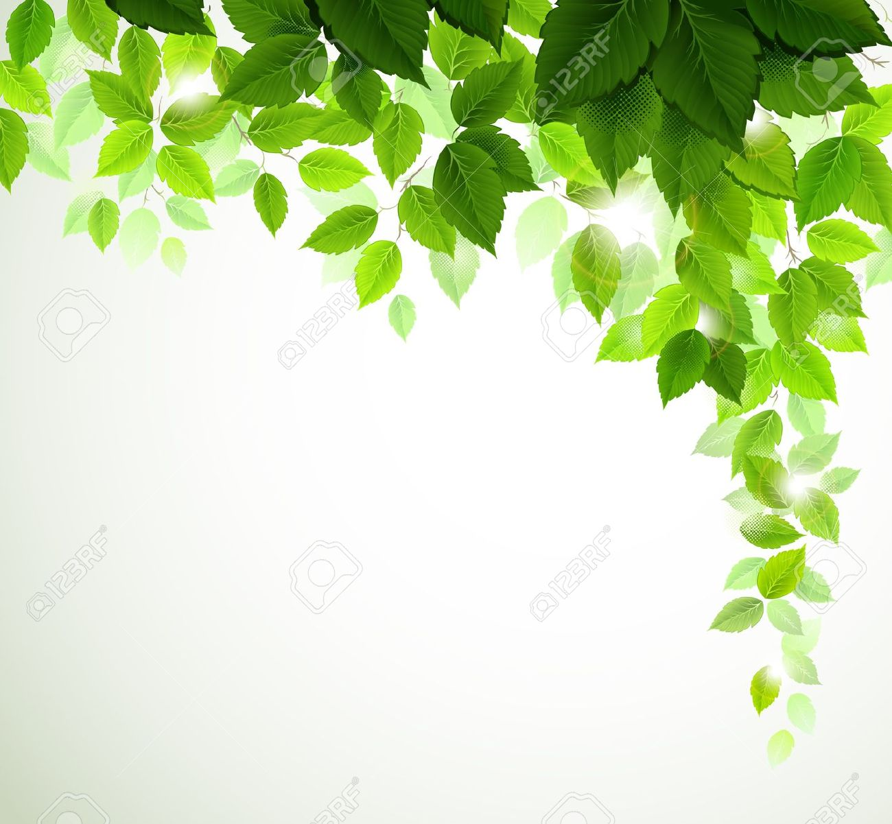 Summer Branch With Fresh Green Leaves Royalty Free Cliparts.