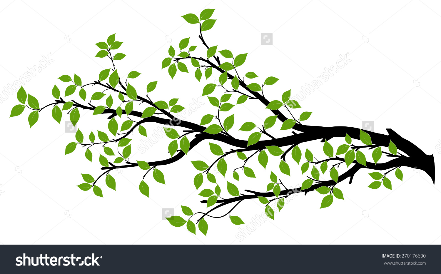 Tree Branch Green Leaves Over White Stock Vector 270176600.