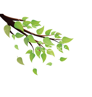 Green leaves tree branch vector by artshock.