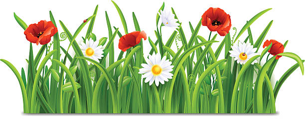 Illustration Of Summer Grass With A Flower And A Ladybug Clip Art.
