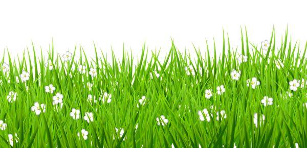 Прозрачный Трава с белыми цветами Клипарт.