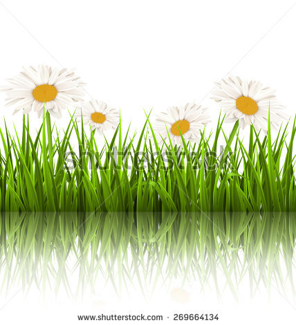 Green Grass Floral Borders Isolated On Stock Vector 71598673.