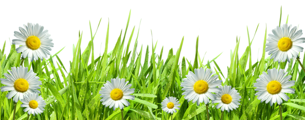Grass with Flowers PNG by HanaBell1.deviantart.com on @deviantART.