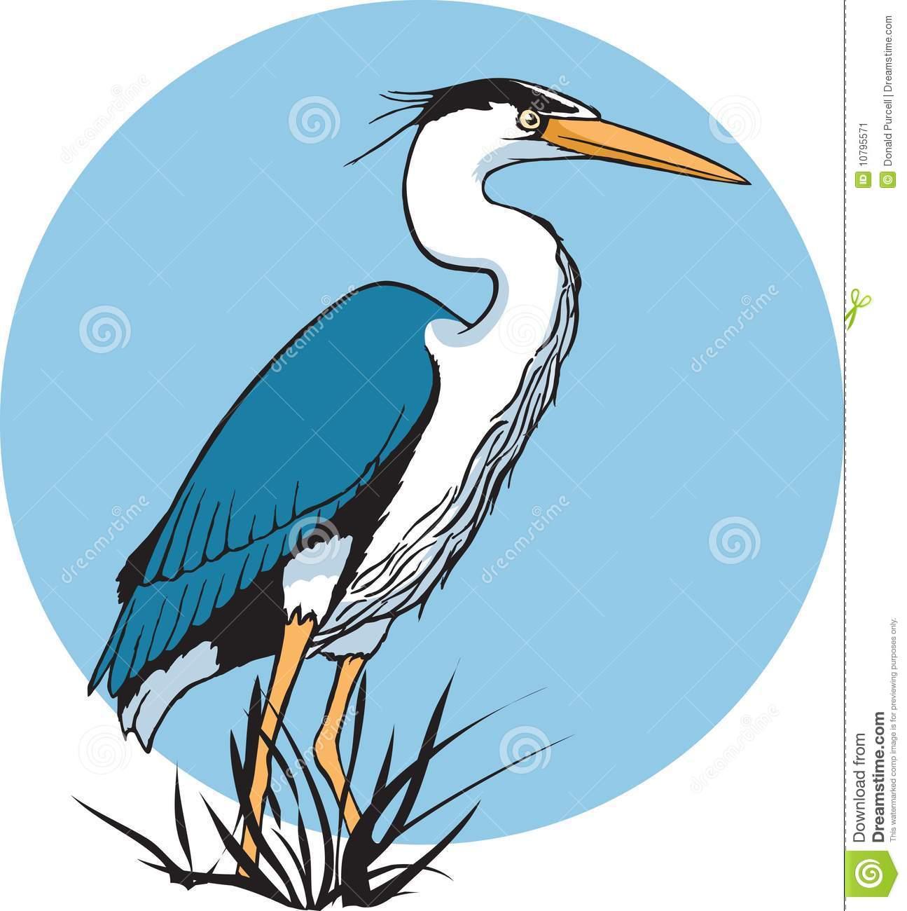 Heron Stock Image.