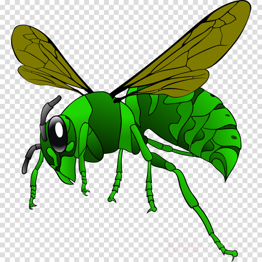 Bee, Leaf, Wing, transparent png image & clipart free download.