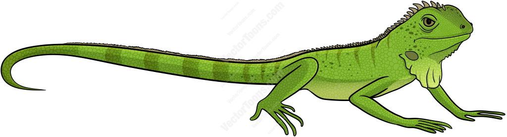 Iguana Clipart & Iguana Clip Art Images.