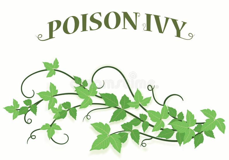 Poison Ivy Stock Illustrations.