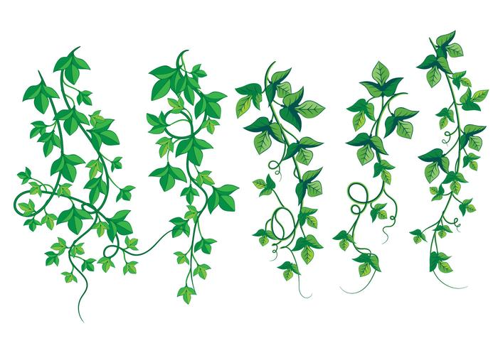 Illustration of Wild Growing Poison Ivy.
