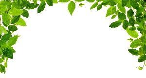 Green Leaf Border Clipart.