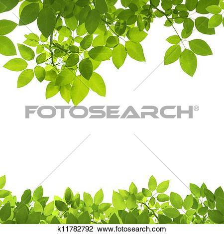 Stock Photo of Green Leaves Border on white background k11782792.