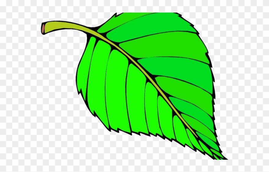 Green Leaves Clipart Long Leaf.