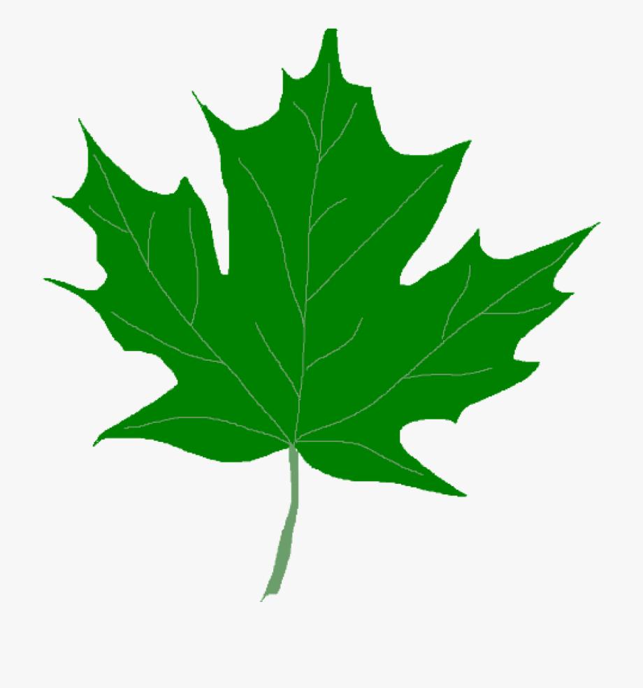 Leaves Clipart Dark Green Leaf.