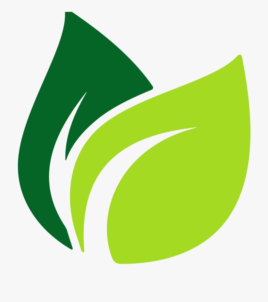 Image Result For Leaf Vector Origins Pinterest.