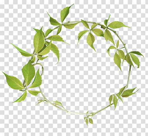 green leaf wreath transparent background PNG clipart.