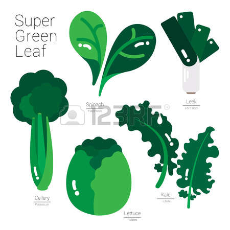 564 Green Leafy Vegetables Stock Vector Illustration And Royalty.