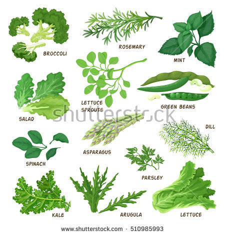 Green Leafy Vegetables Stock Vectors, Images & Vector Art.
