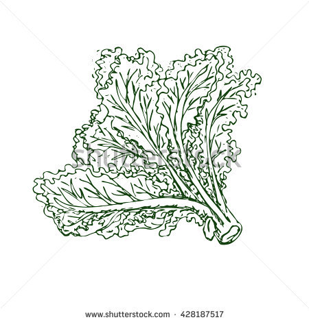 Leafy Vegetable Stock Images, Royalty.
