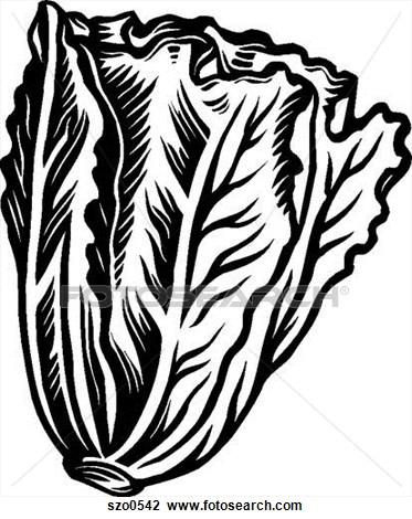 Lettuce Clipart Black And White.