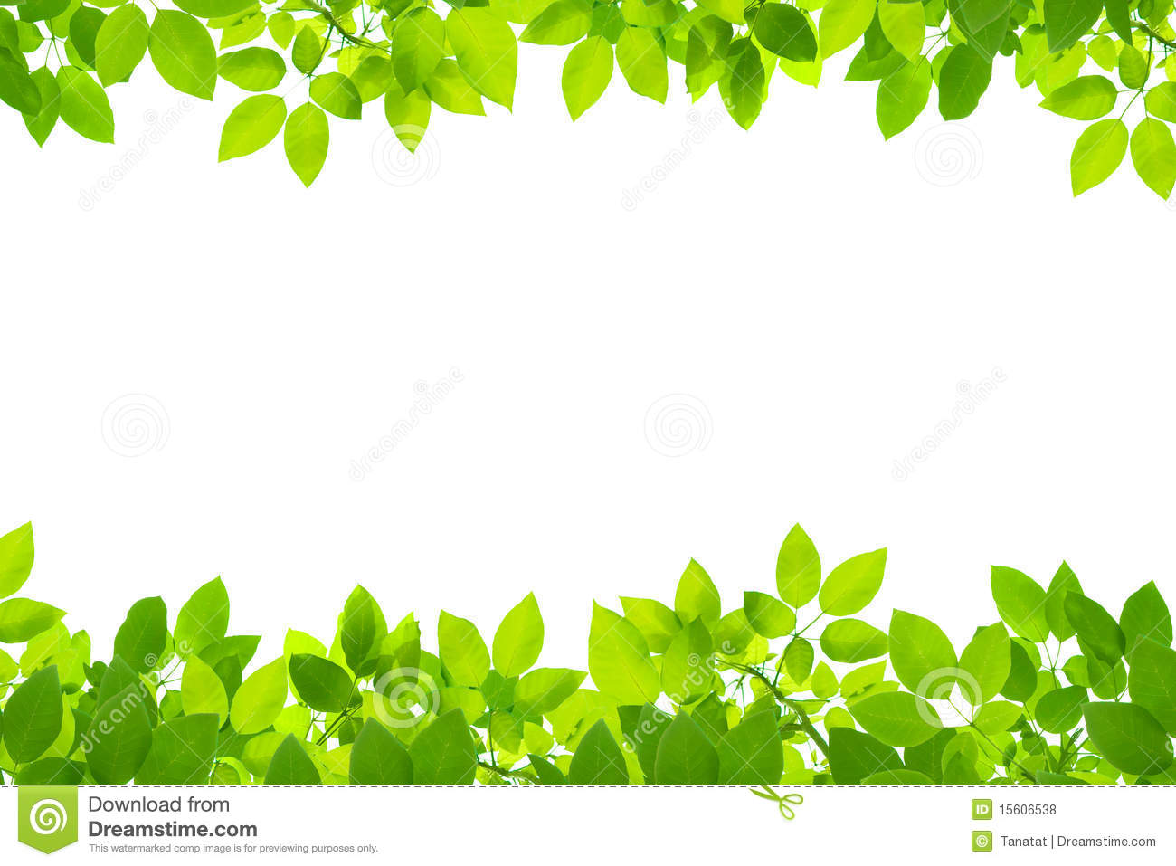Green Leaves Background Royalty Free Stock Photos.