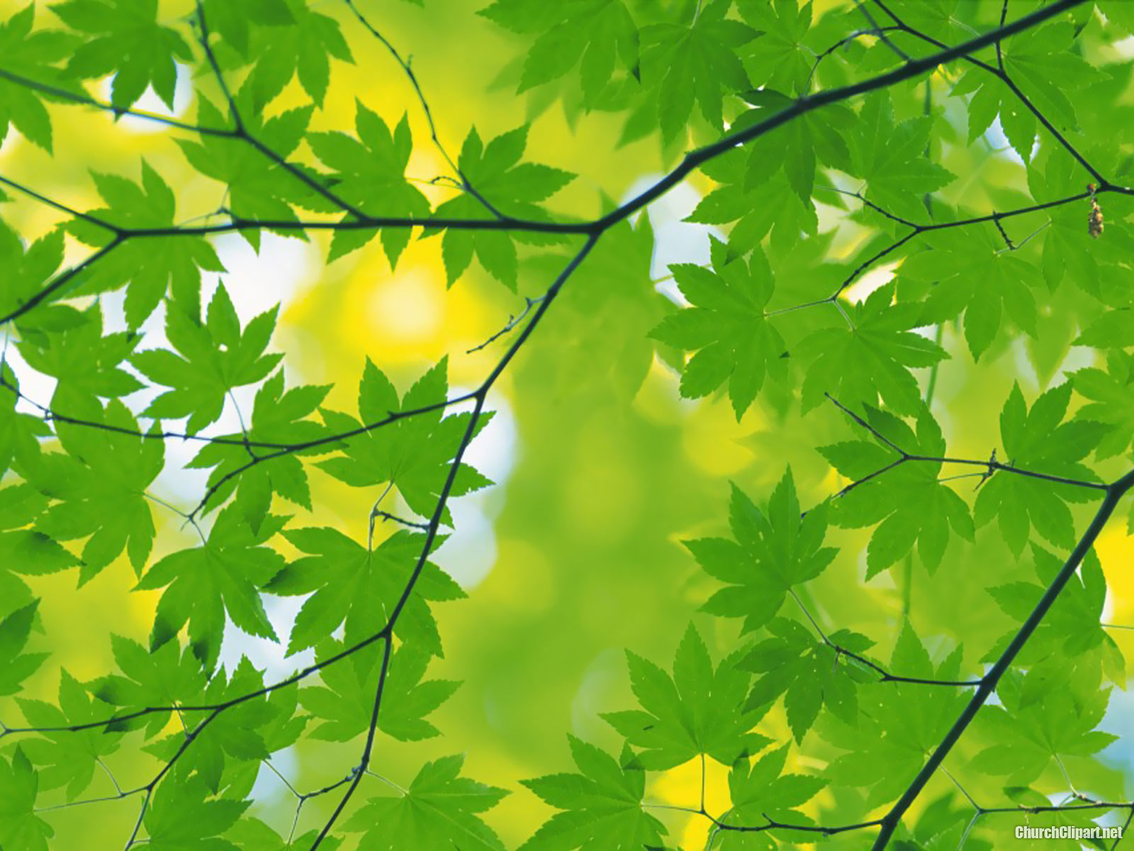Fresh Green Leaves Powerpoint Background.