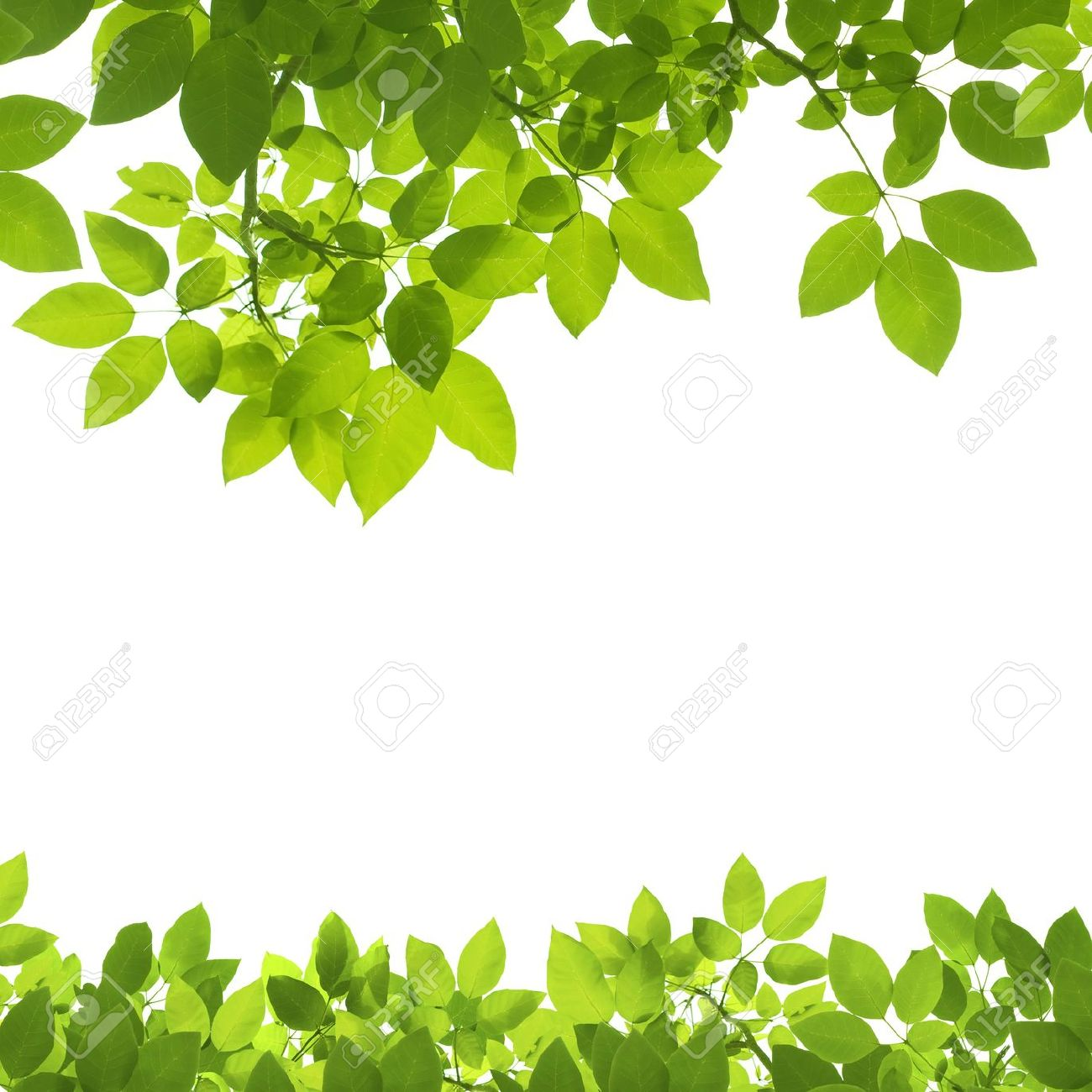 Green Leaves Border On White Background Stock Photo, Picture And.