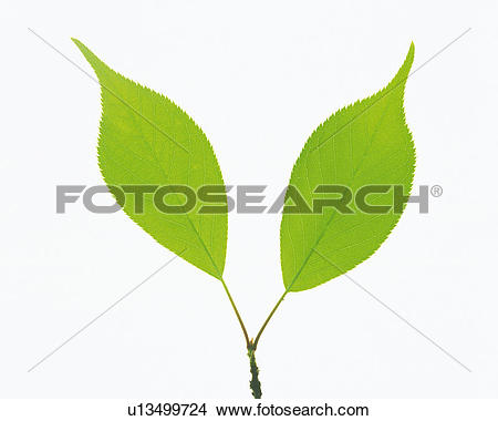 Stock Photo of Two Same.