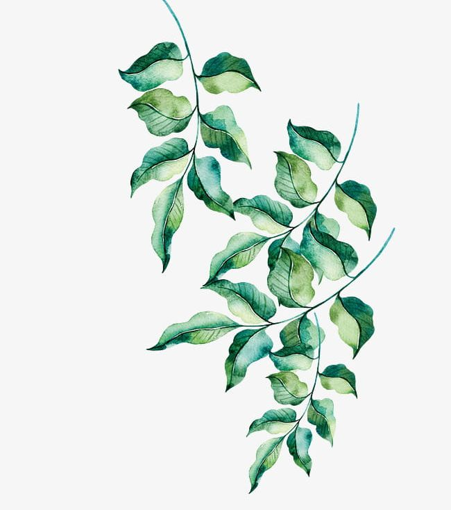 Hand Painted Green Leaves PNG, Clipart, Green, Green Clipart, Hand.