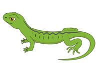 Free Lizard Clipart.
