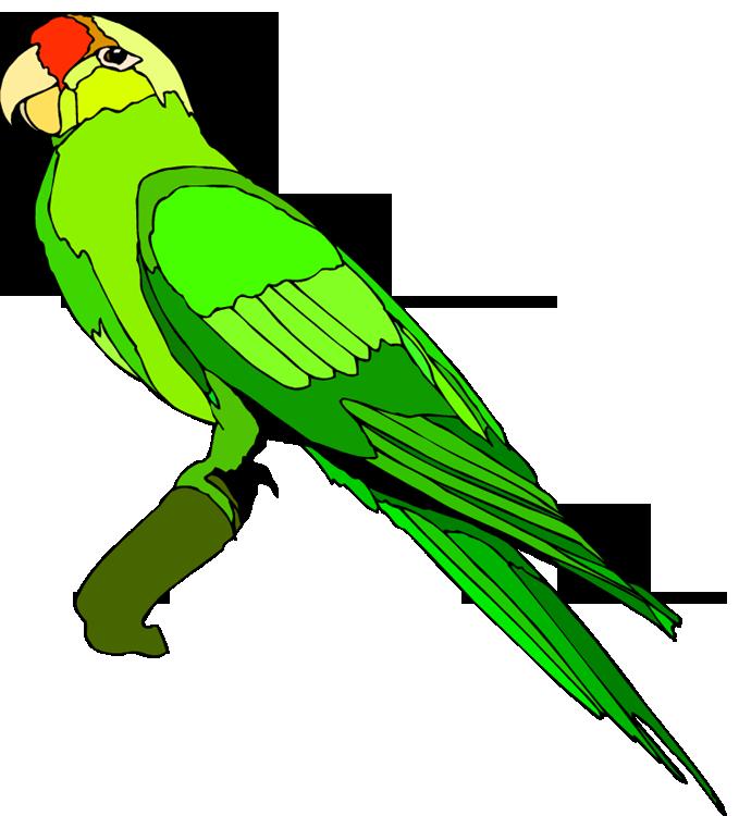 Parrot Clipart & Parrot Clip Art Images.
