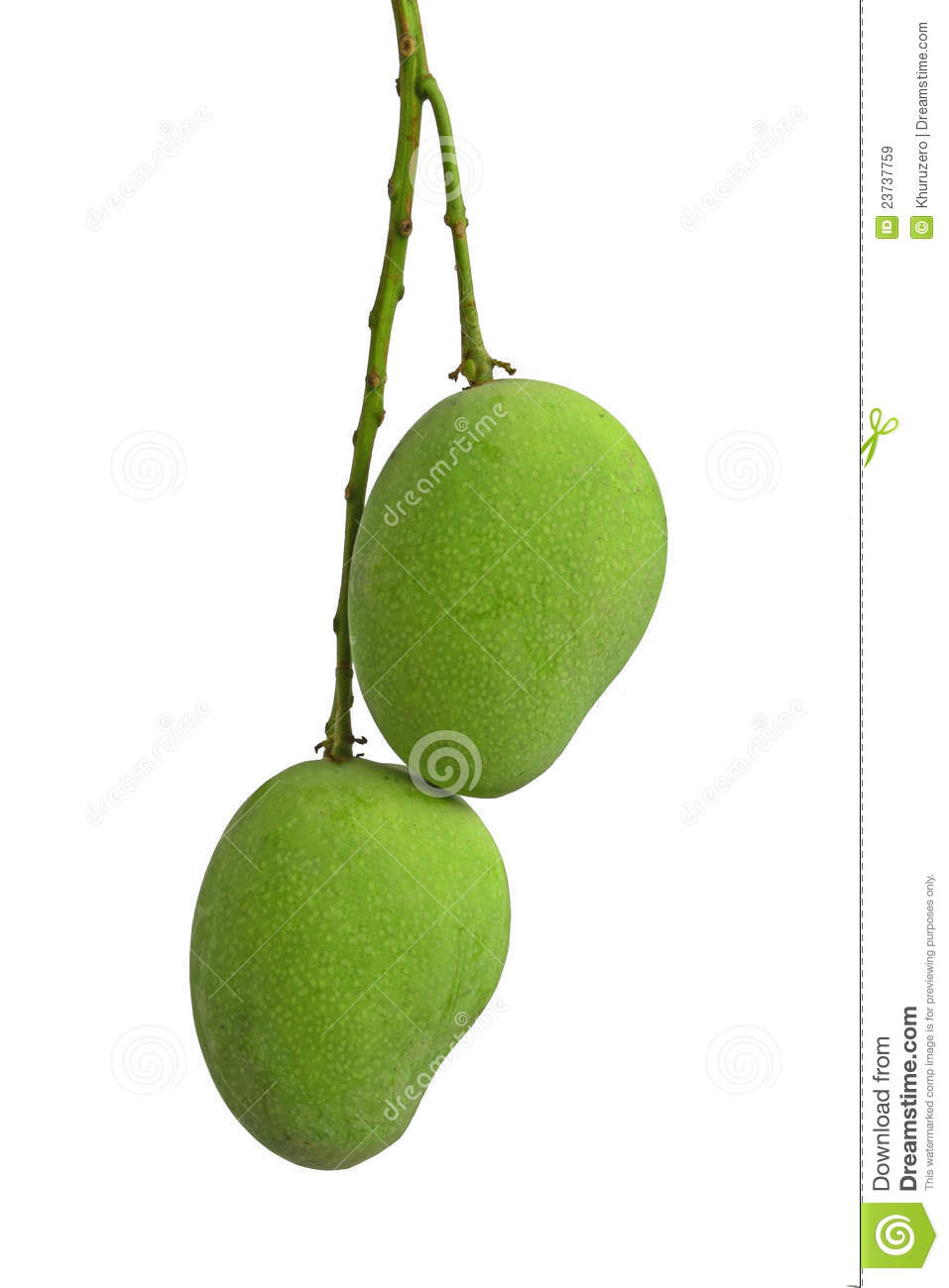 Green Mango Royalty Free Stock Images.
