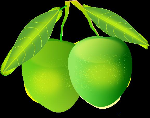 Green mango clipart.