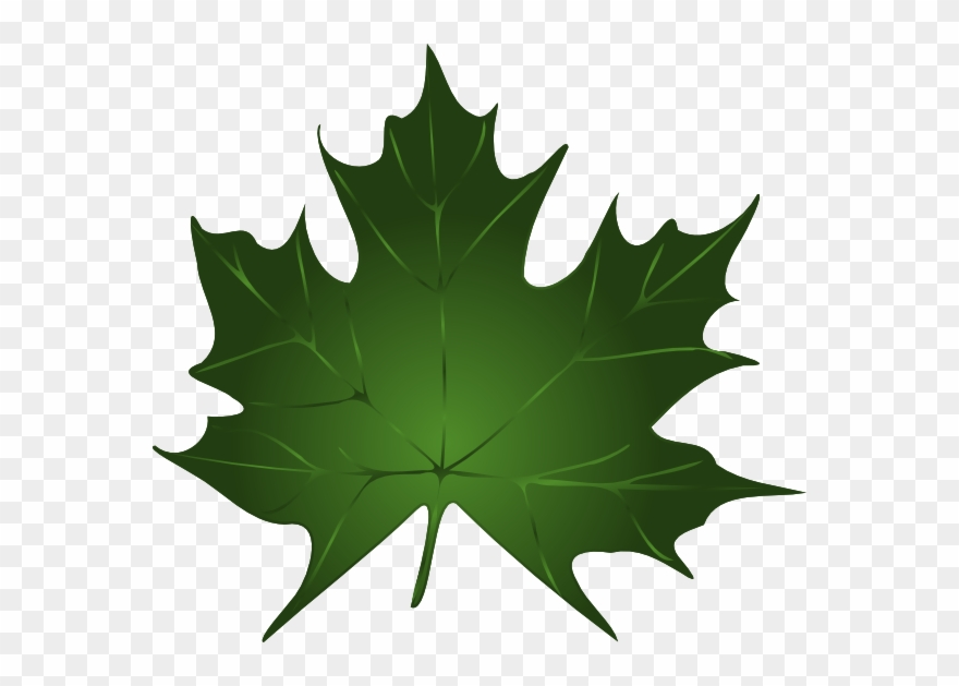 Green Maple Leaf Clipart Kid.