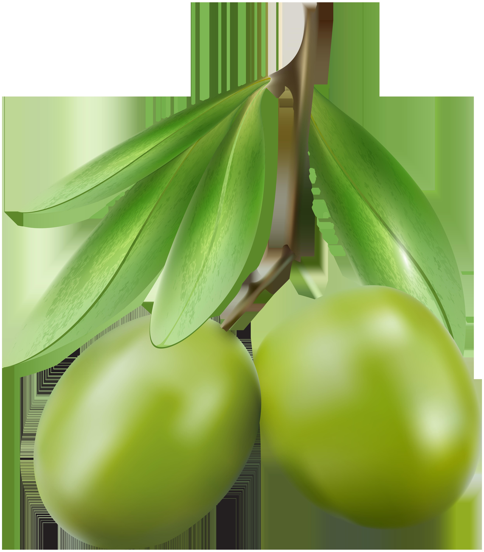 Green Olives PNG Clip Art Image.
