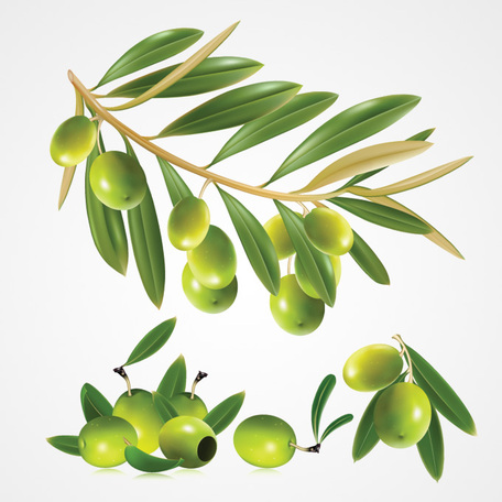 Vector olives clipart.