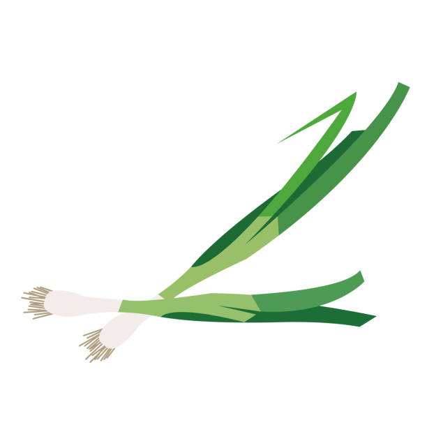 Best Green Onion Illustrations, Royalty.