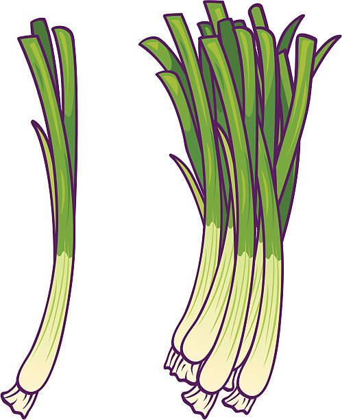 Best Green Onion Illustrations, Royalty.