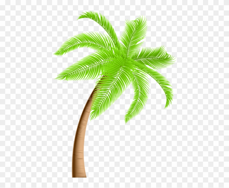 Download Palm Tree Png Png Images Background.