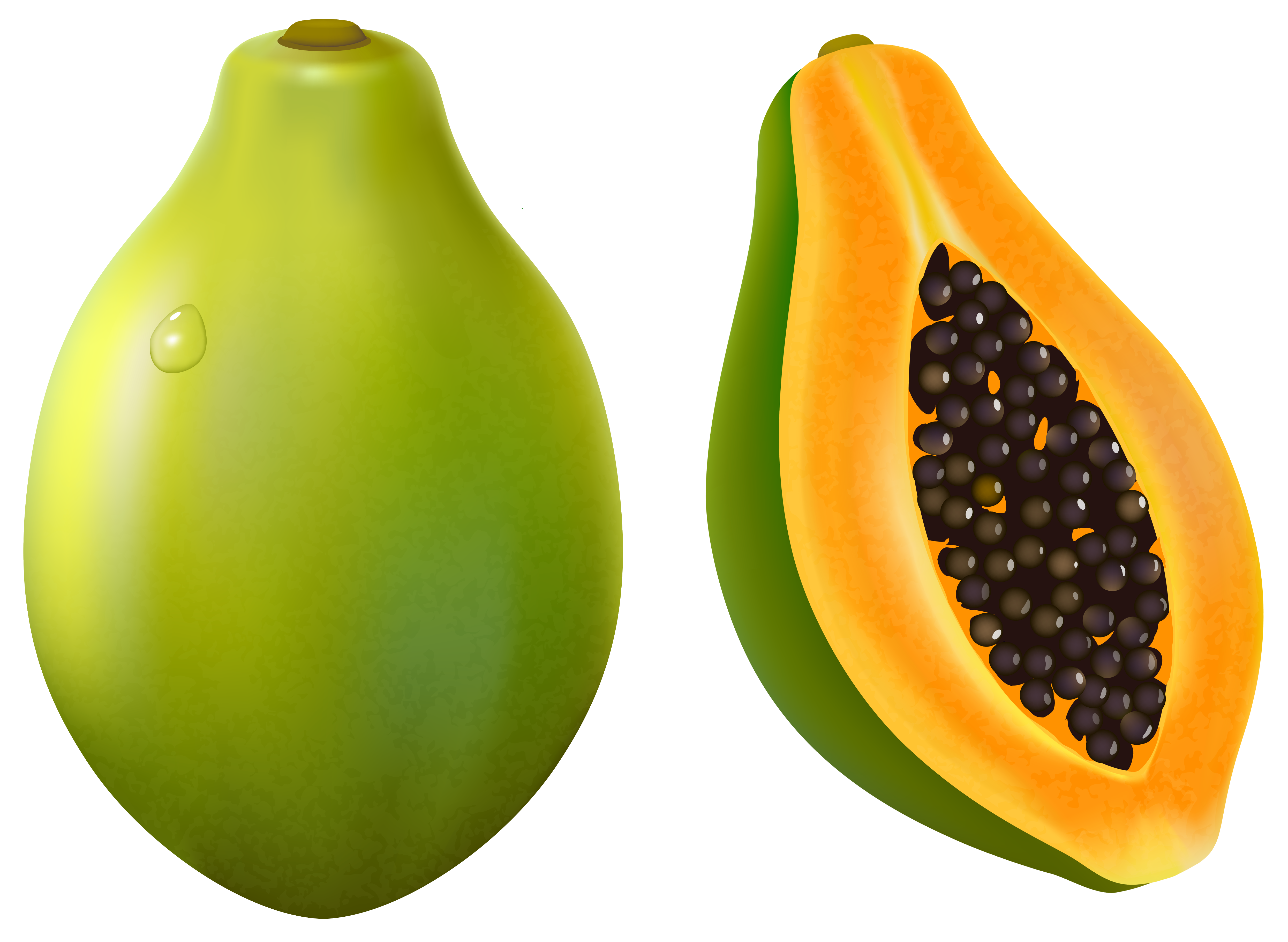 papaya clipart - photo #5
