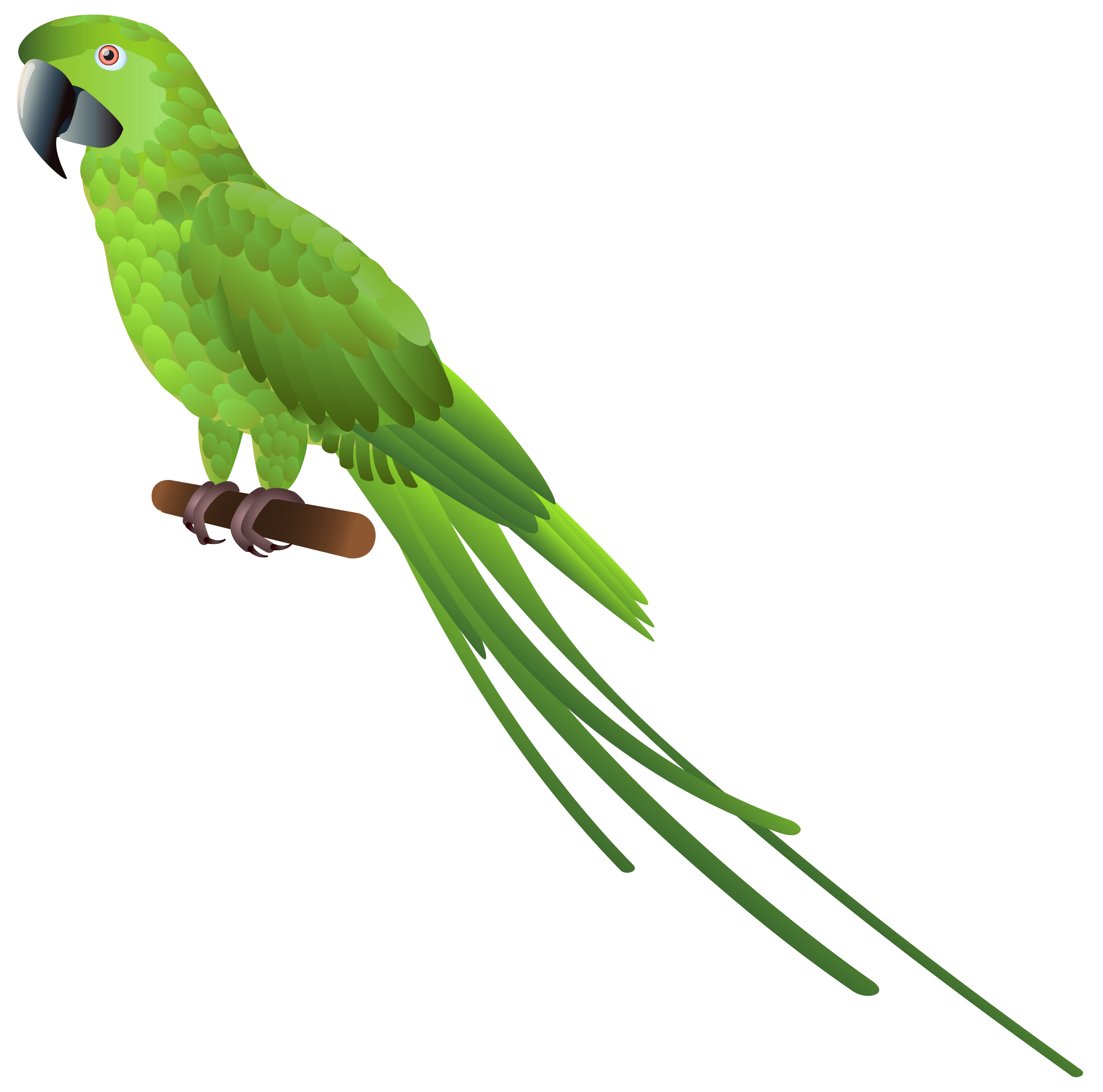 Green Parrot PNG Clipart.