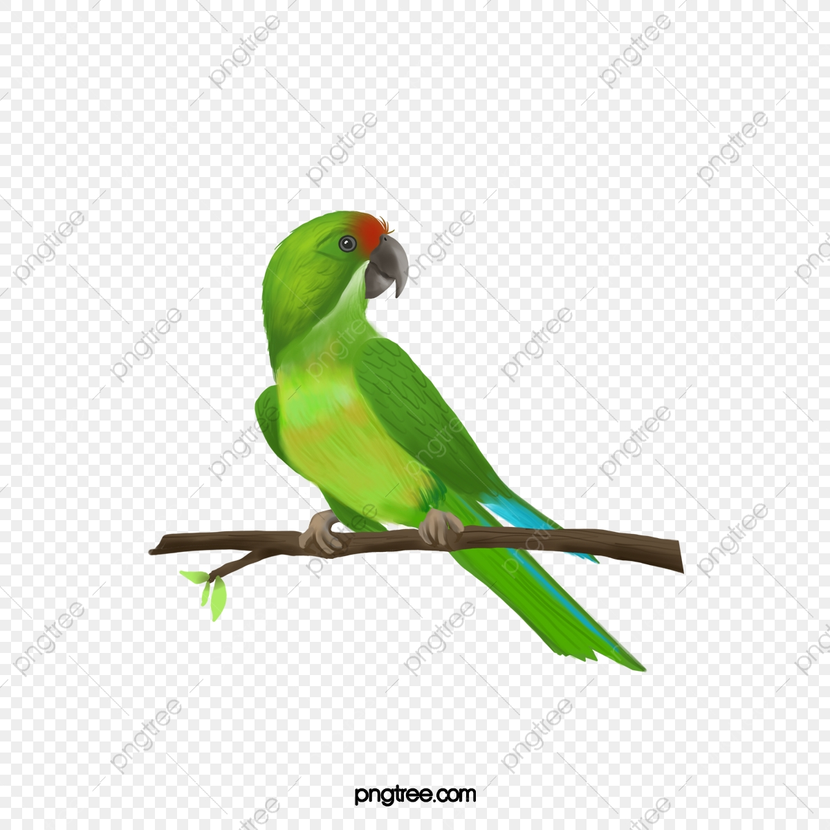 Green Parrot Pictures, Parrot Clipart, Green Parrot, Birds PNG.
