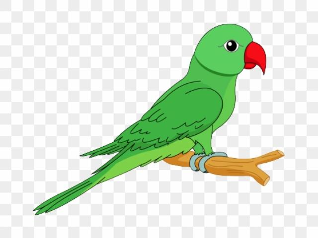 Free Parrot Clipart, Download Free Clip Art on Owips.com.