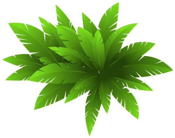 Green Plant Decoration PNG Clipart Image.