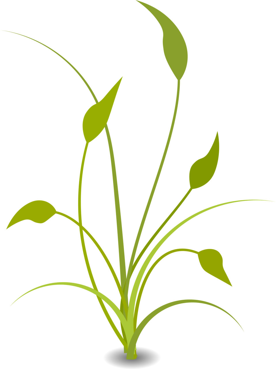 Green plant clipart.