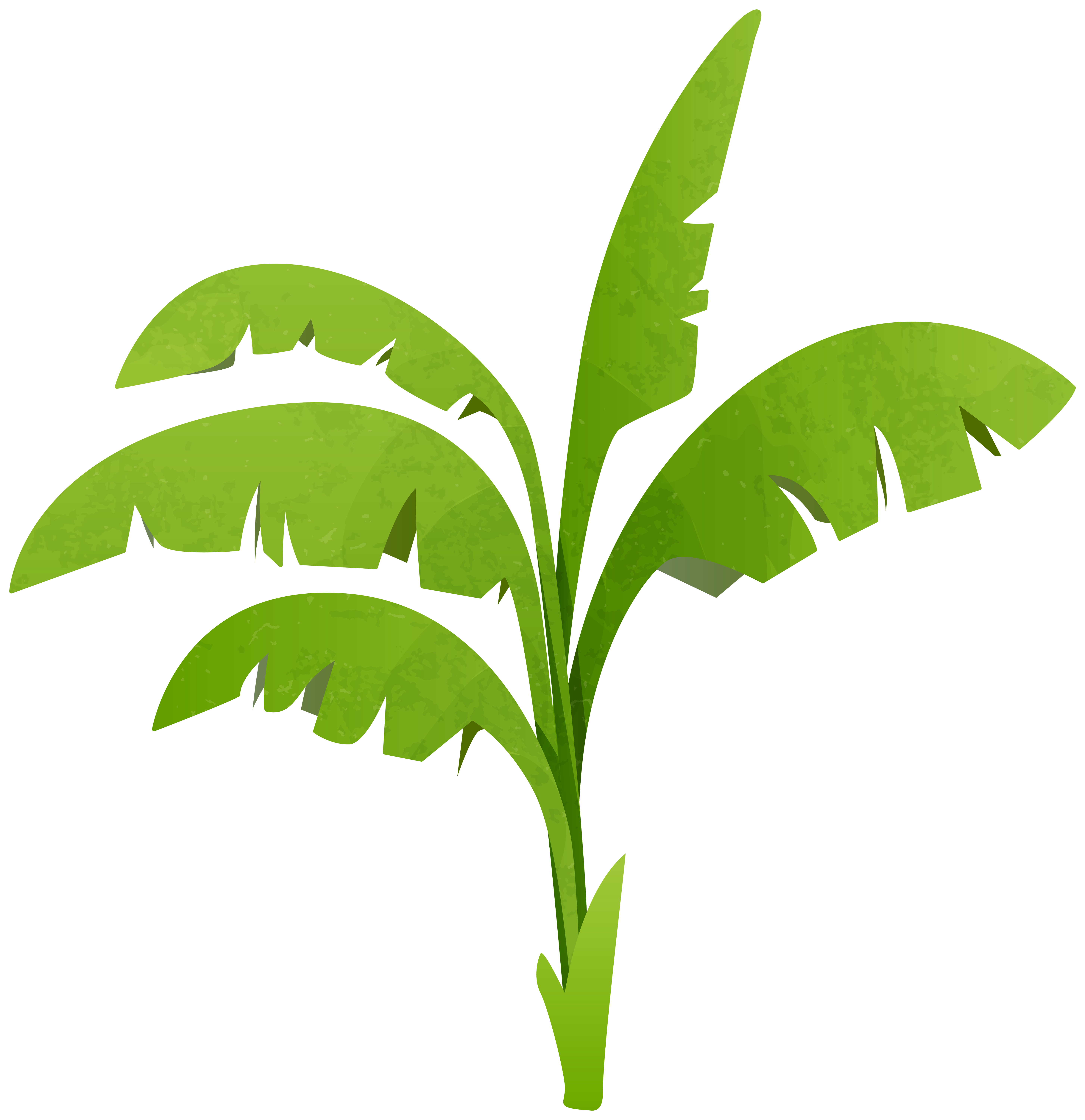 Plants Png Clipart - Alleghany Trees for Plant Transparent Png  299kxo