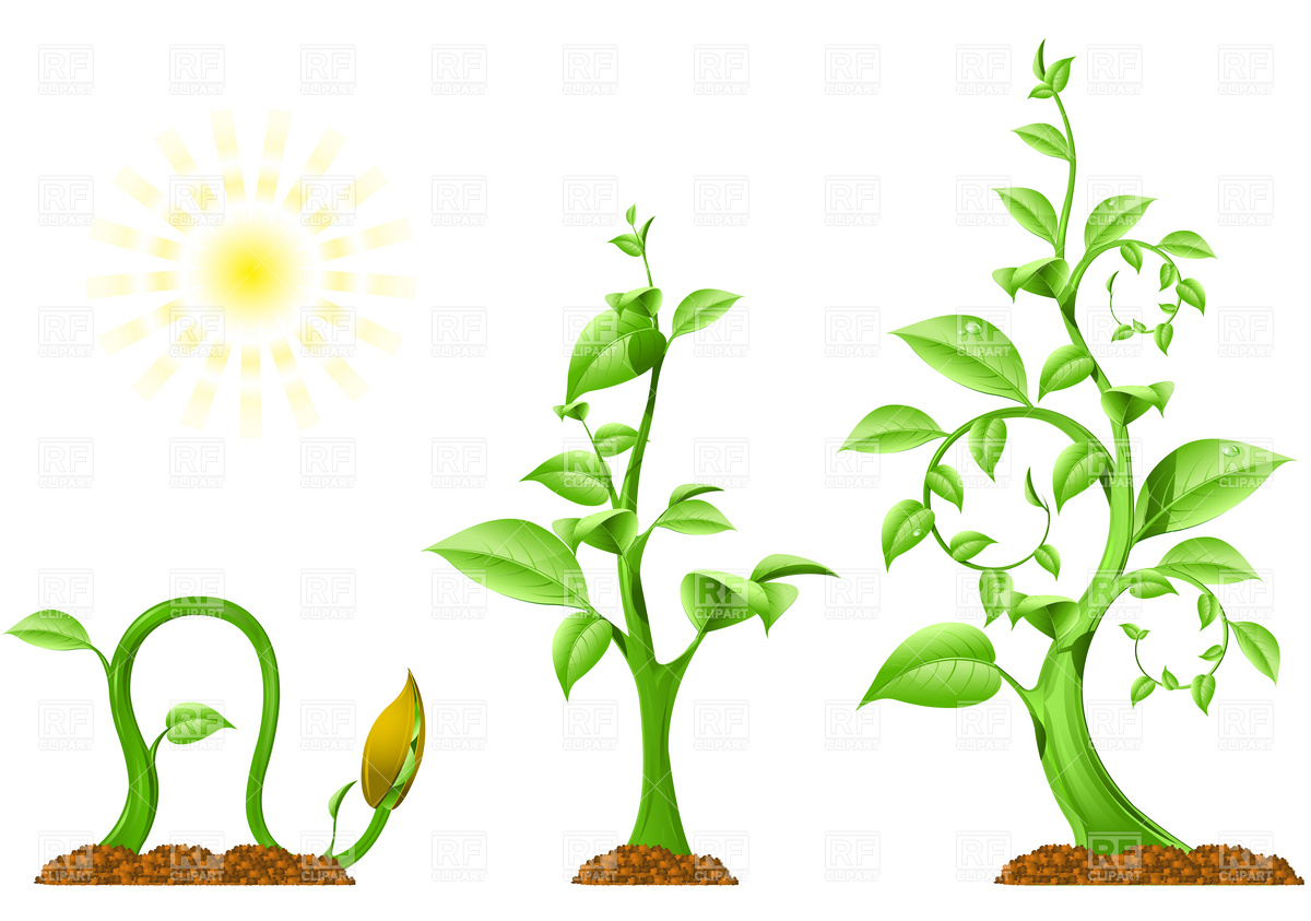 Clipart for growing green plants.
