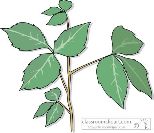 Poison plants clipart images.