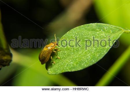 Beetle Stock Photos & Beetle Stock Images.