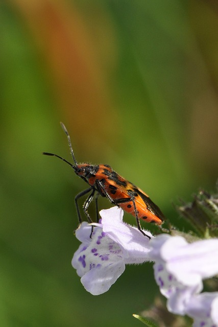 Free pictures BEETLE.