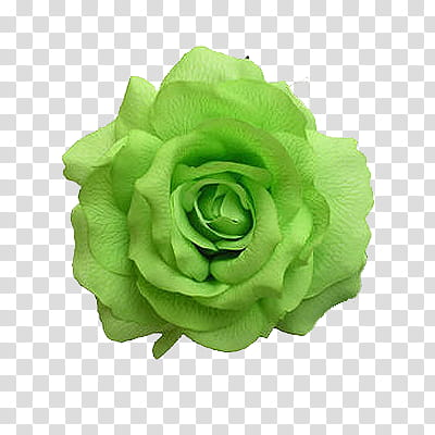 Flowers World, green rose transparent background PNG clipart.